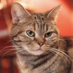 旦那の洋服に付いた猫の毛から浮気が発覚!